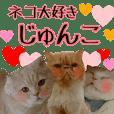 『ネコ写真』名前スタンプ【じゅんこ】