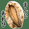 Abalone abalone