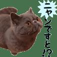 Pets Sticker2