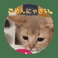 子猫のアビシニアン2