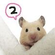 hamster usual 2