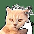 OH MY CAT! 4