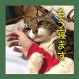 猫のヤマダ氏