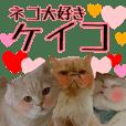 『ネコ写真』名前スタンプ【ケイコ】