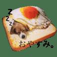 リアルいぬ(いろいろ)