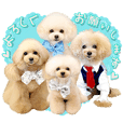 Four of poodle Second edition