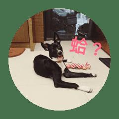 黑皮狗 1