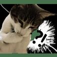 tuuko LOVE cat