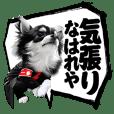 """AZUKI the Chihuahua """"Japanese comics"""""""