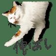 Stretch Stray Cat
