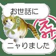 えみちゃんのハンコ入りしゃべるネコちゃん