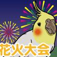 オカメインコ ピーちゃん Vol.5#夏