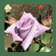 ココロに花を.8