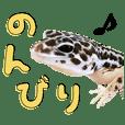 Leopard gecko'sukeroku