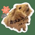 guinea pig godzilla2