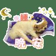 """a cute dog """"BOSS"""""""