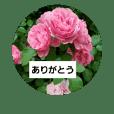 素敵な薔薇達/バラの楽しみ パート2