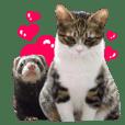うちの猫とフェレット