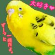 yuzunichi vol.06