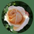 ココロに花を.9