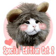 Special Edition - Cat 2