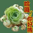 Beautiful plant / Succulent plants
