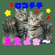 仲良し猫のロコモコとチヂミ