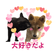 Shibainu and Black cat