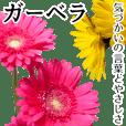 本物の花『ガーベラ』よく使う言葉で40種