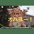 竹富島の日常