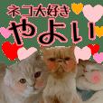 cat paradise yayoi