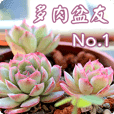 Succulent Friends 01 - Daily greetings