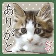 猫のりり 2