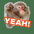 real monkey sticker 3