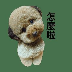 紅貴賓小熊2