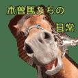 木曽馬たちの日常