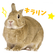 SAVE THE RABBITS Sticker