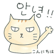 Everyday Korean cat Sticker