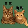 傻貓二人組