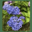 ココロに花を.10