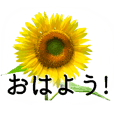 A floral message! Sunflower Part2