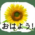 暮らしに花を♪ひまわり Part2