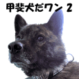 甲斐犬 玄米 (写真編 2)