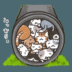 Cat's Square