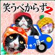 笑える猫写真❤ノワール城の仲間達2