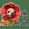 Wasabi Happy Dog V.2