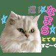 ねこミュニケーション3-なまら北海道弁-