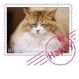 Sticker like a stamp.picture of cats.