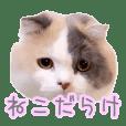 my sweet mofumofu cats