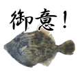 Thread-sail filefish BUSHI ver
